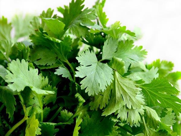 3 najboljši načini uporabe in koriandrovih listov za nego kože