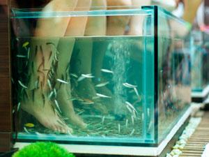 فوائد سبا الأسماك 'دغدغة'؟