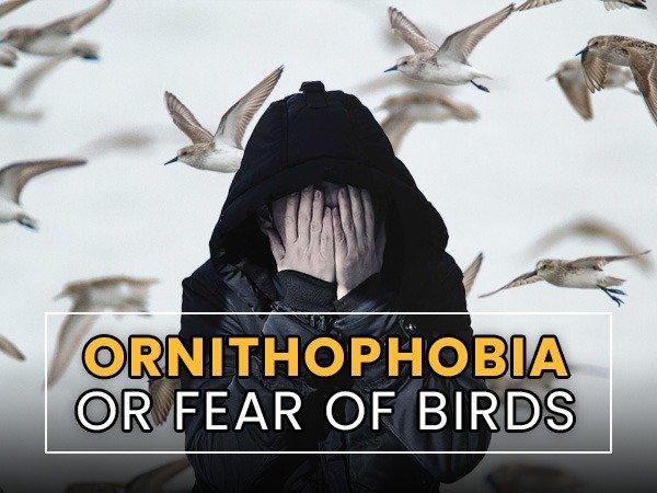 ორნითოფობია ან ფრინველის შიში: მიზეზები, სიმპტომები, დიაგნოზი, მკურნალობა და პროფილაქტიკა