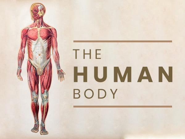 Ҷисми инсон: Дар бораи анатомия, далелҳо ва таркиби химиявӣ огоҳ шавед