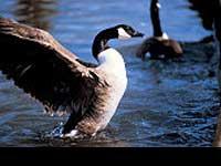 National Bird Day - En dag for vores fjervenner