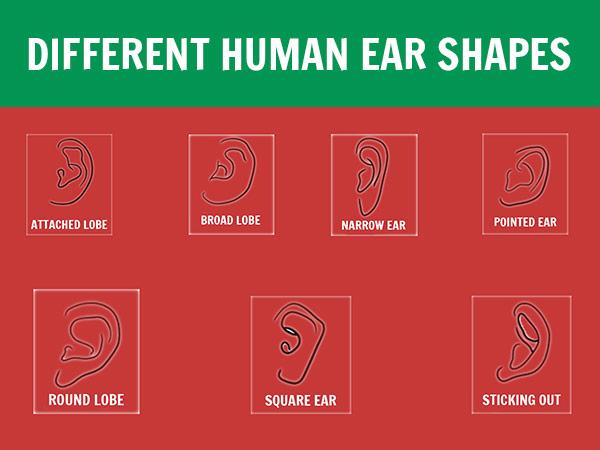 Що виявляє форма вашого вуха про вашу особистість