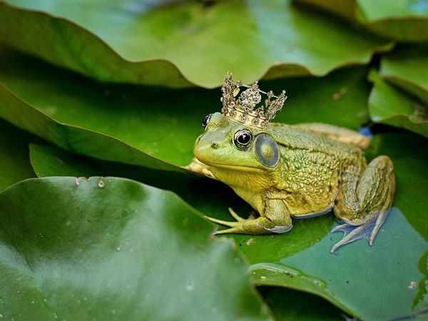 Що означає мрія про жаб під час вагітності