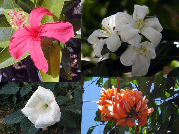 Хиндуистички богови и њихово омиљено цвеће